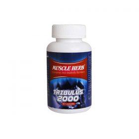 کپسول ماسل هرب بهتا دارو افزایش هورمون های مردانه 60 عدد
